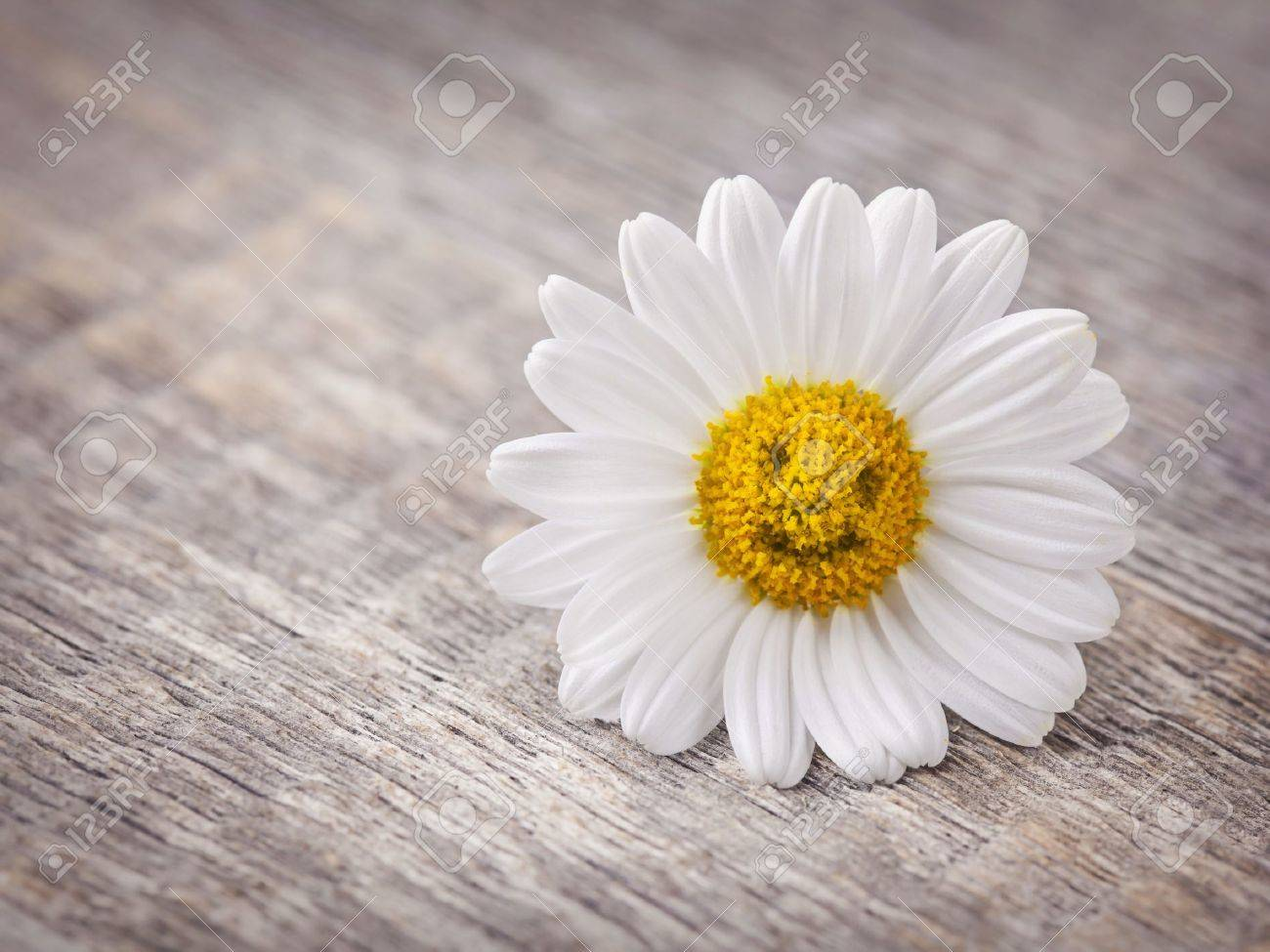 Chamomile flower on wooden background - 19134933