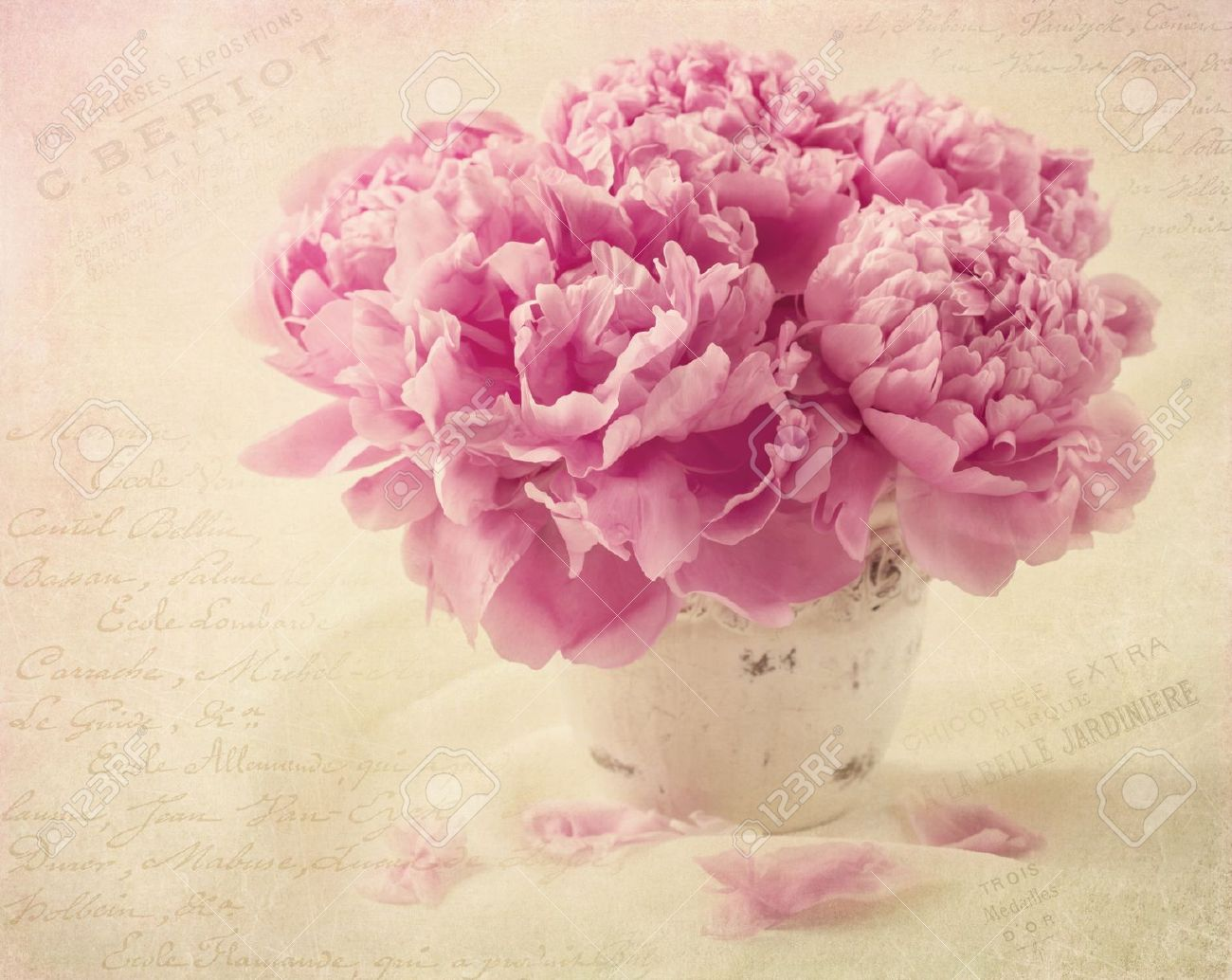 Peony flowers in a vase Stock Photo - 19982015