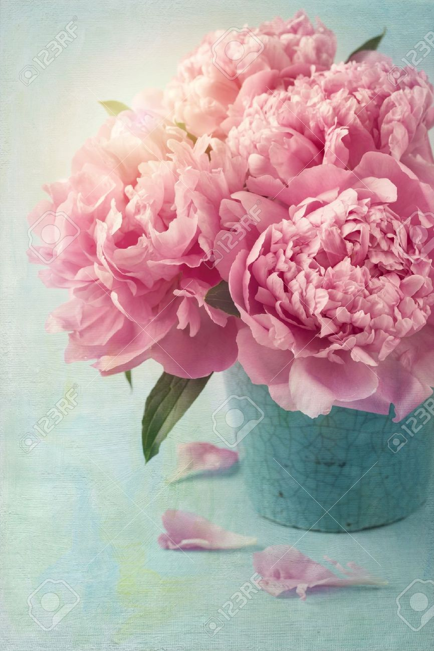 peony flowers in a vase stock photo picture and royalty free image