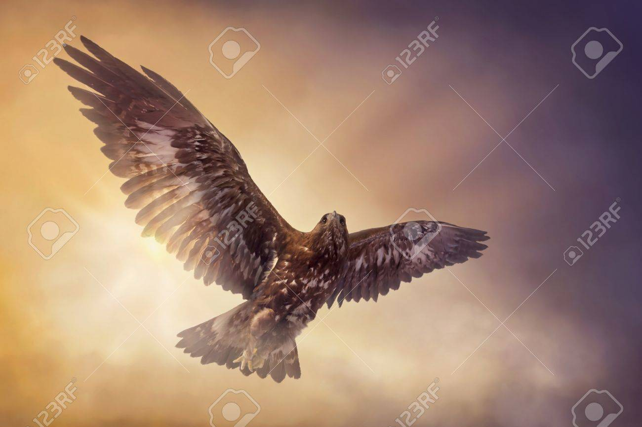 Eagle flying in the sky - 21643483