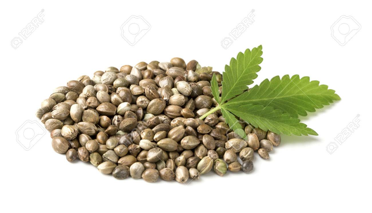 Hemp seeds with a green leaf on a white background - 55678015