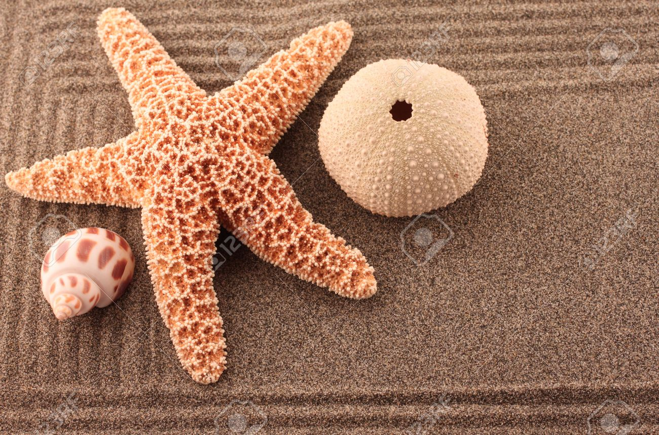 Zen Sand Garden With Starfish And Sea Urchin Stock Photo, Picture ...