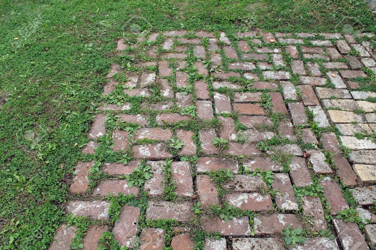 Red Brick Patio With Grass Growing Between The Pavers Stock Photo   65835394