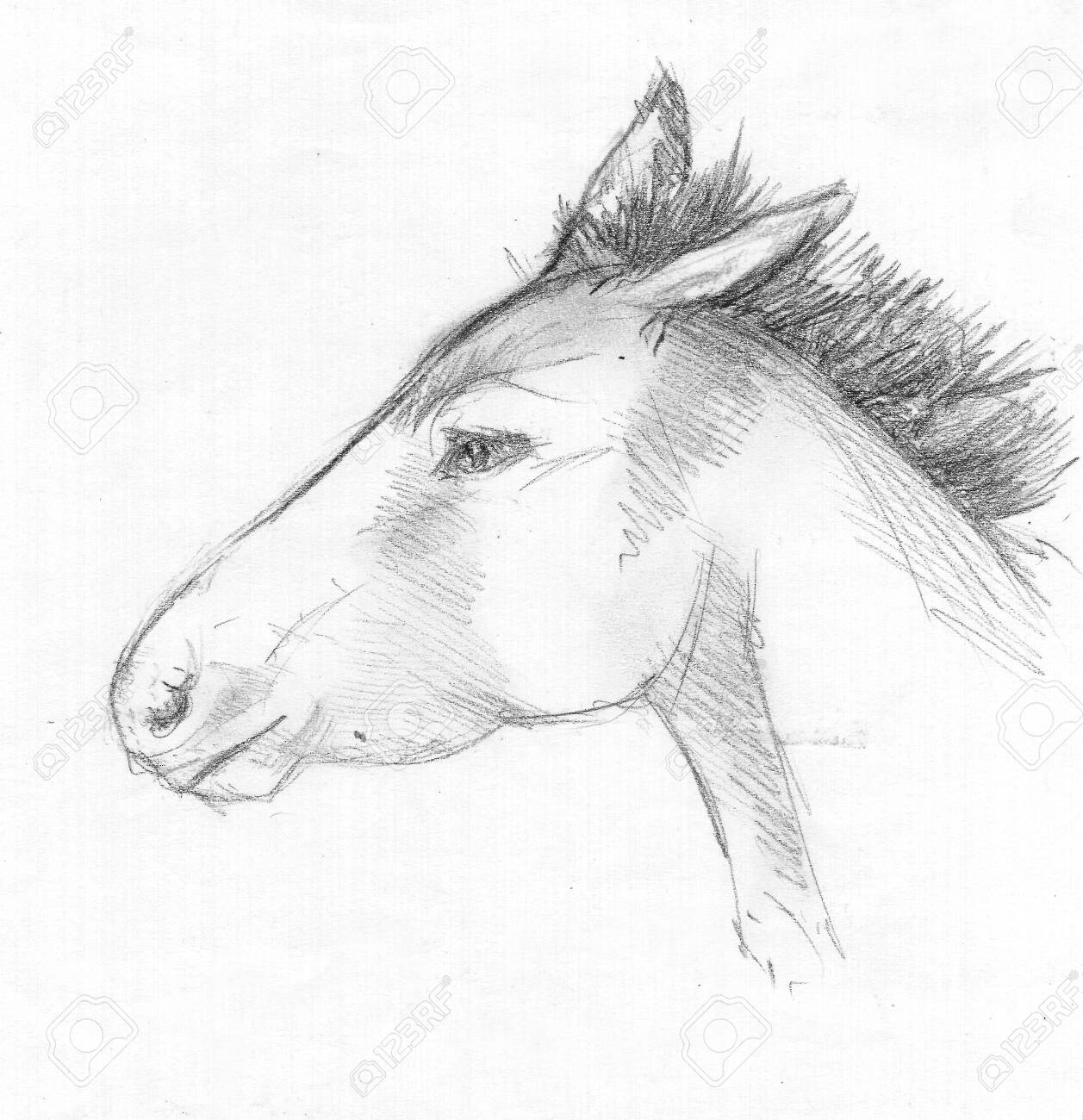 Sketch Of A Wild Horses Head Charcoal Stock Photo Picture And Royalty Free Image Image 150112000