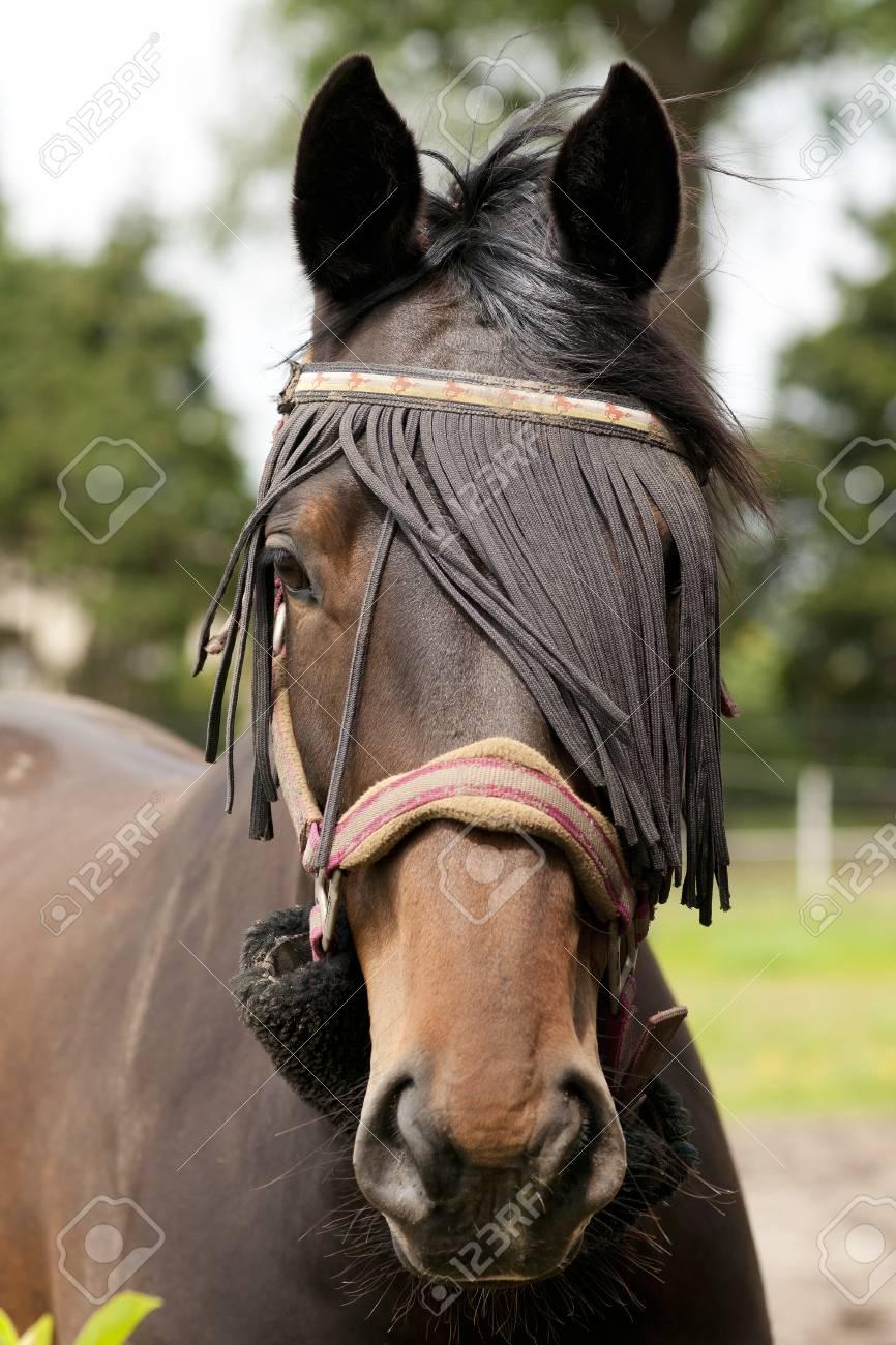 Horse close up Stock Photo - 18042965