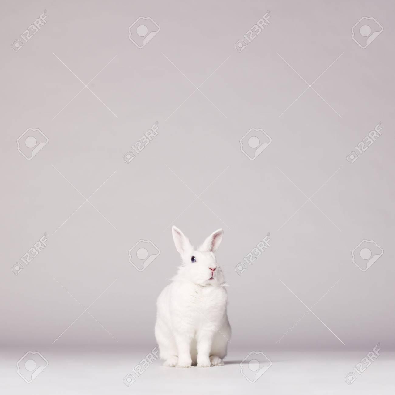 Studio photo of white rabbit on white background Standard-Bild - 39545137