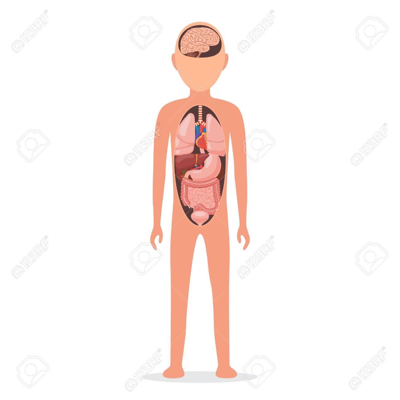 Cuerpo Humano Con órganos Internos Ilustraciones Vectoriales, Clip ...