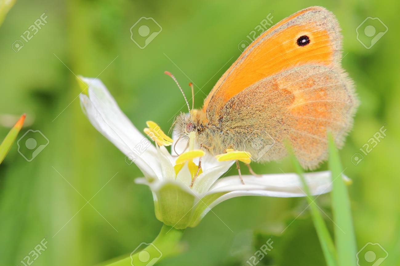 butterfly Stock Photo - 13549866