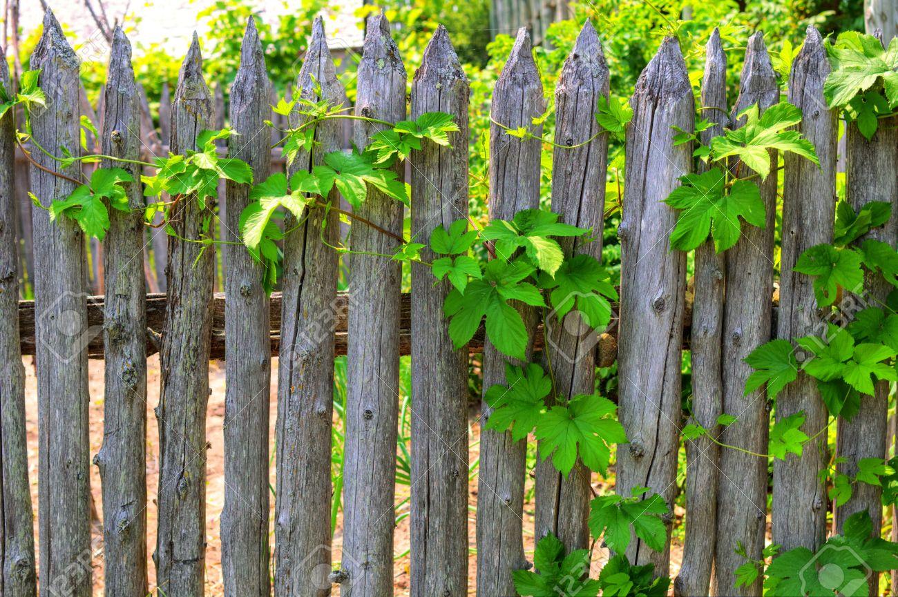 Clôture de jardin photo stock. Image du peinture, beau ...