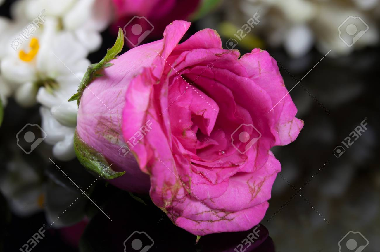Beautiful Jasmine Garland Of Flowers With Pink Rose Stock Photo