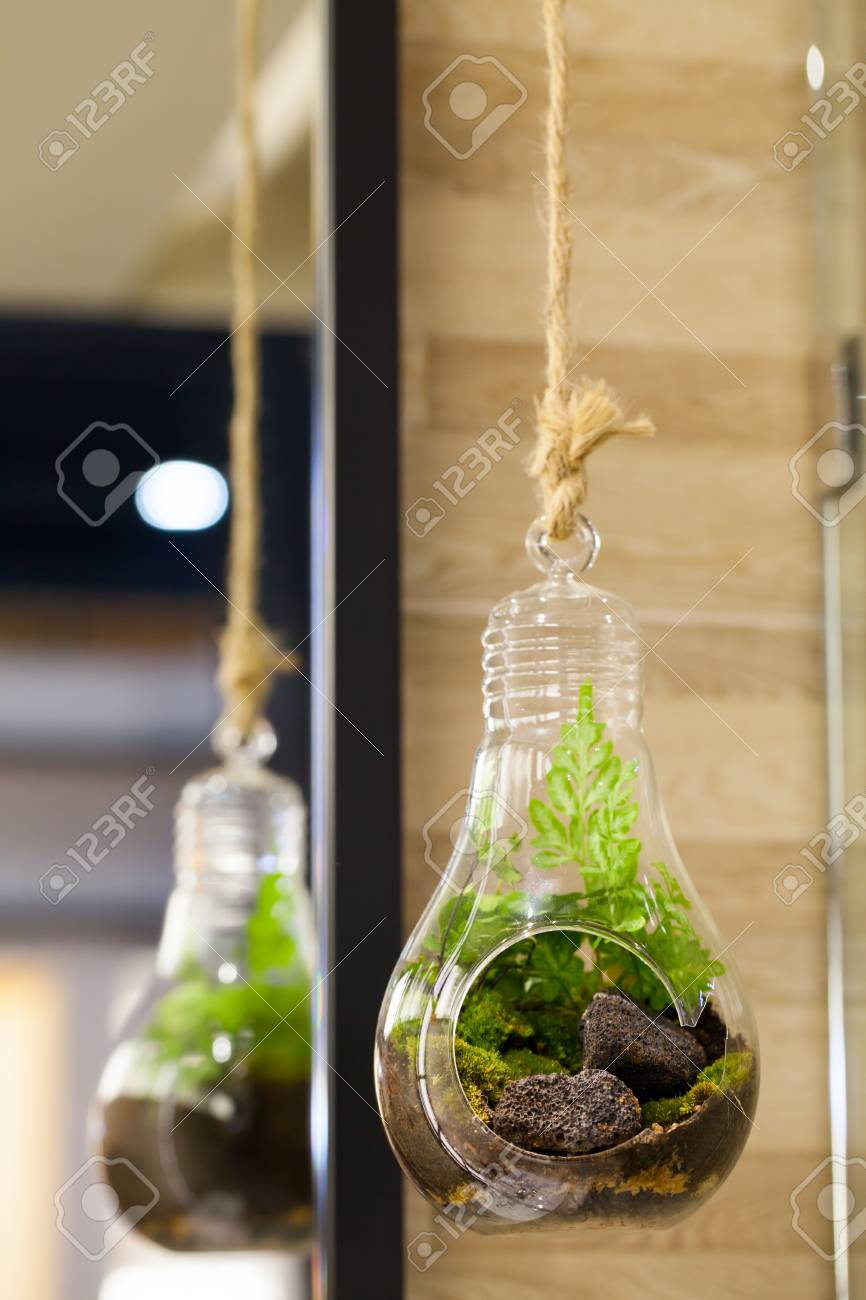Small Garden Of Terrarium Bottle In Glass Hanging Stock Photo