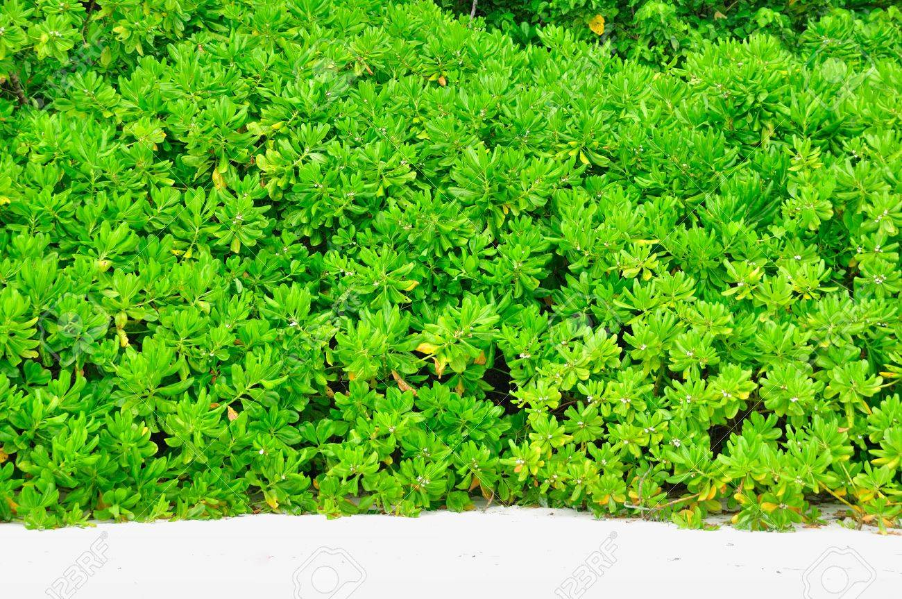 Green bush on the beach for background Stock Photo - 17664385