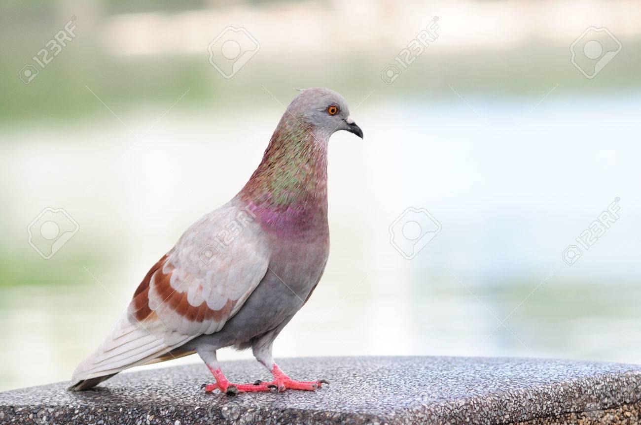 Portrait bodily movement action bird of peace Stock Photo - 23950457