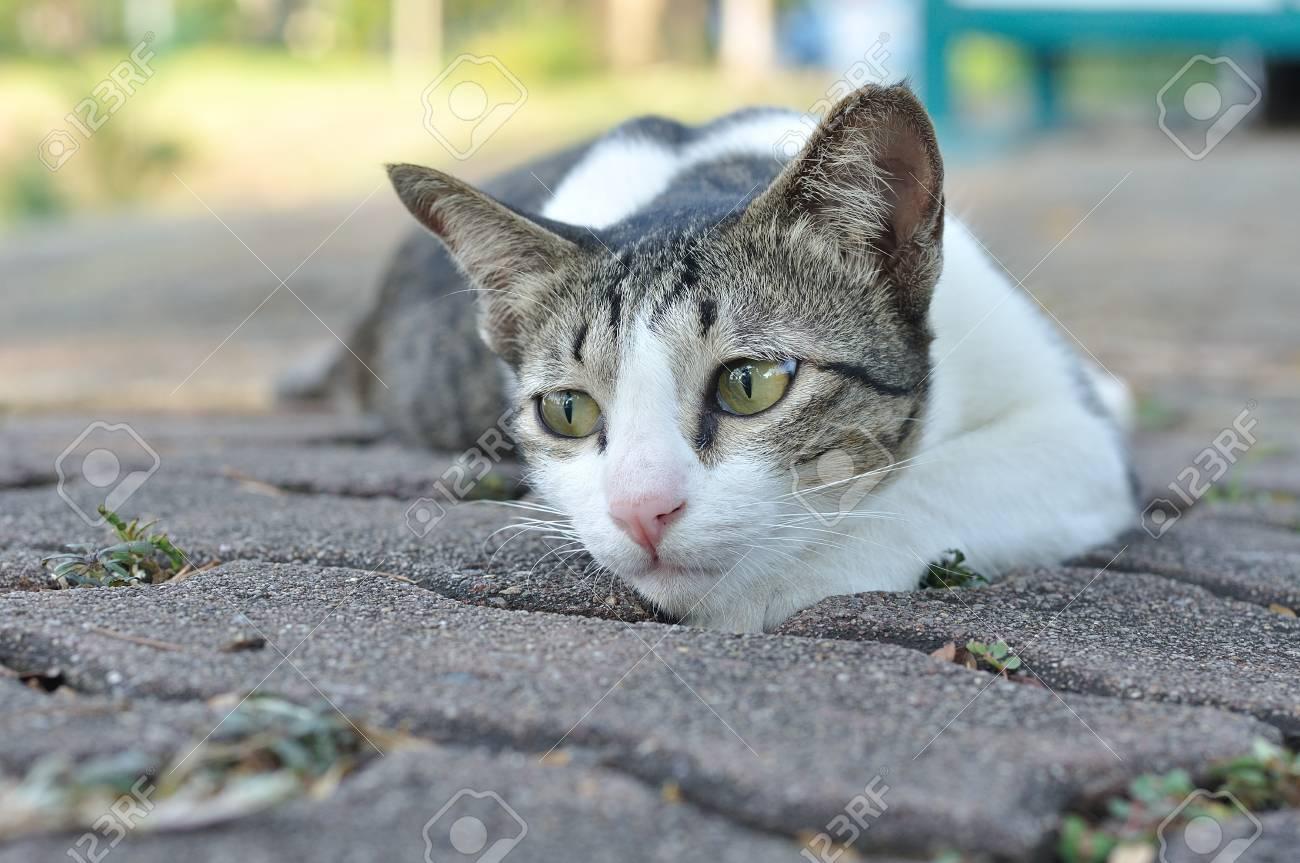 Immagini Stock Gatto Bianco E Grigio è Accovacciato In Giardino