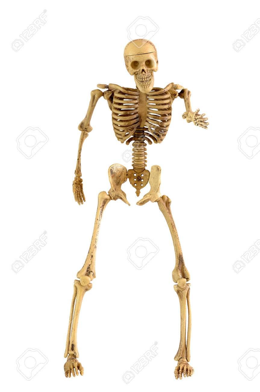 Excelente Huesos Del Pie Esqueleto Humano Friso - Anatomía de Las ...