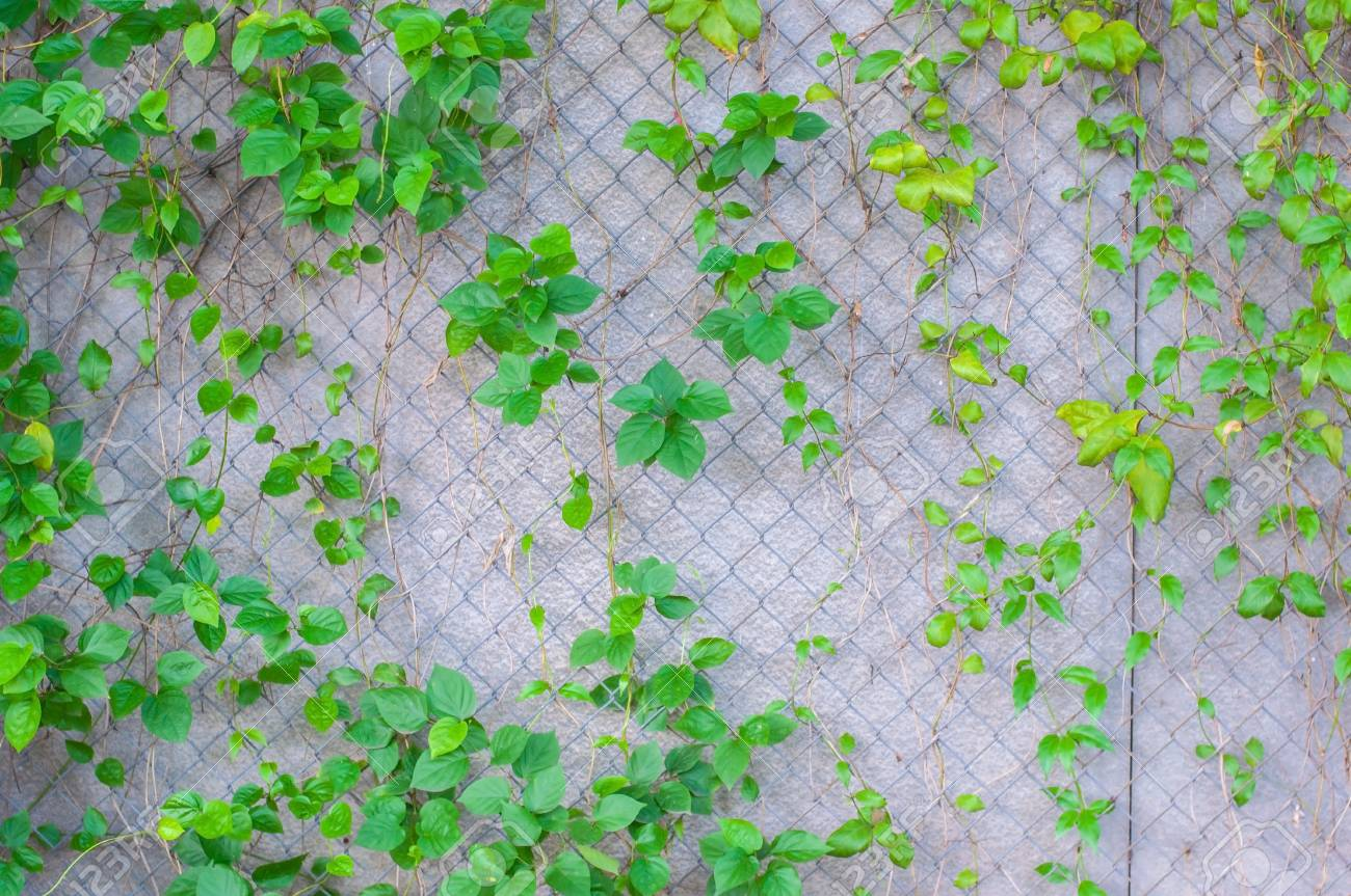 Green Plants Grow Up On Concrete Wall Pattern And Texture Background Stock Photo Picture And Royalty Free Image Image 94277595