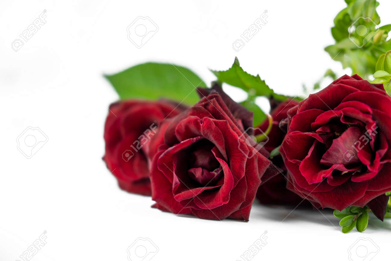 banner with flower bouquet of red roses on isolated white background with copy space for valentines day holiday - 160849410