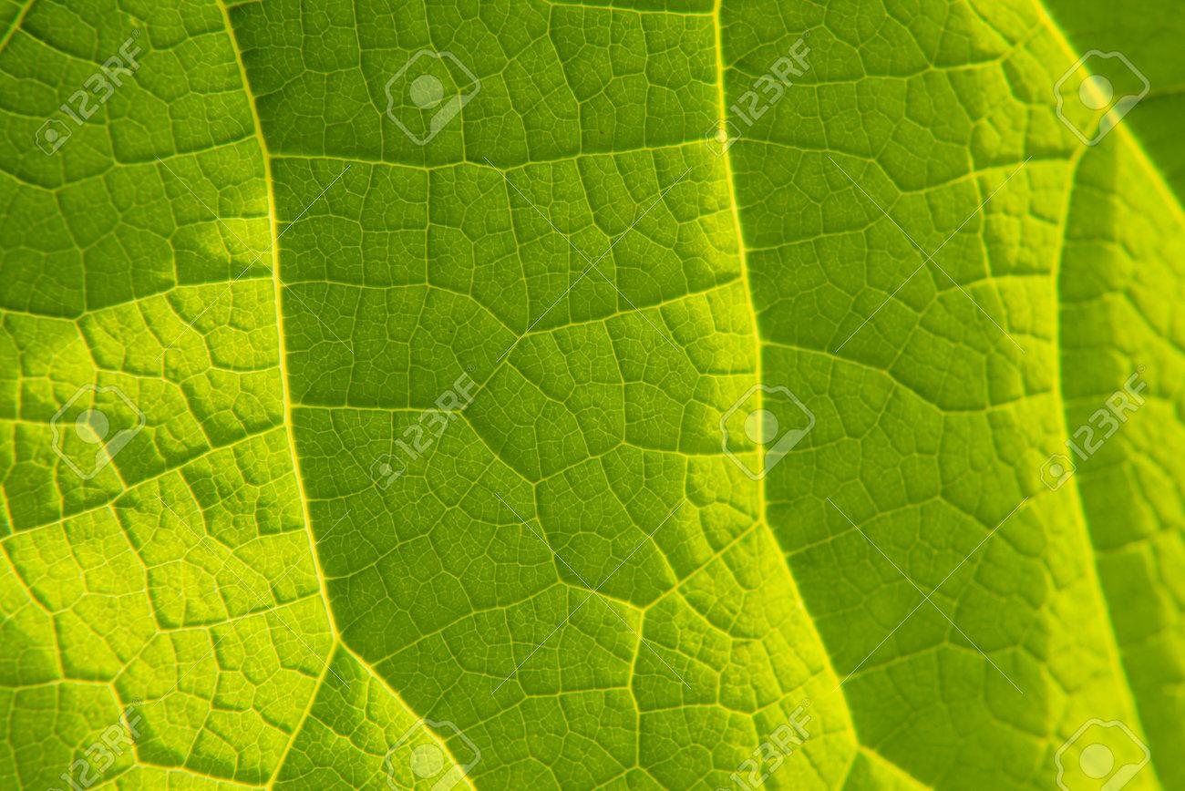 palm leaf green tropical background wallpaper closeup - 162659320