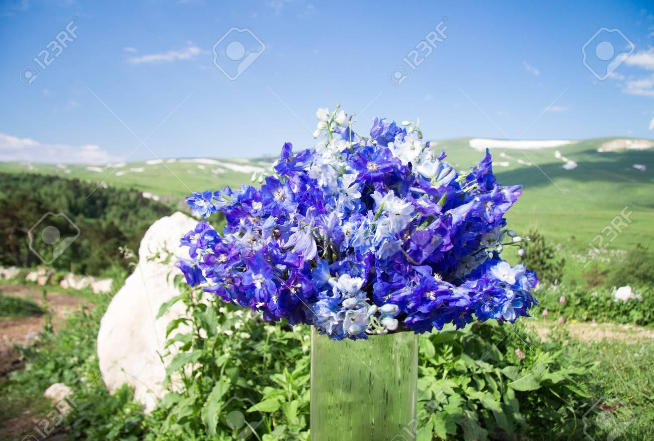 Archivio Fotografico , Mazzo di fiori blu su uno sfondo di valle di montagna