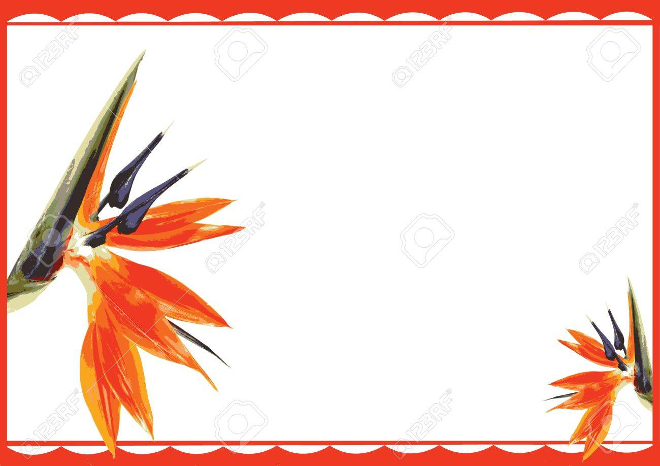 Two Bird Of Paradise Flower Gift Card Royalty Free Cliparts ...