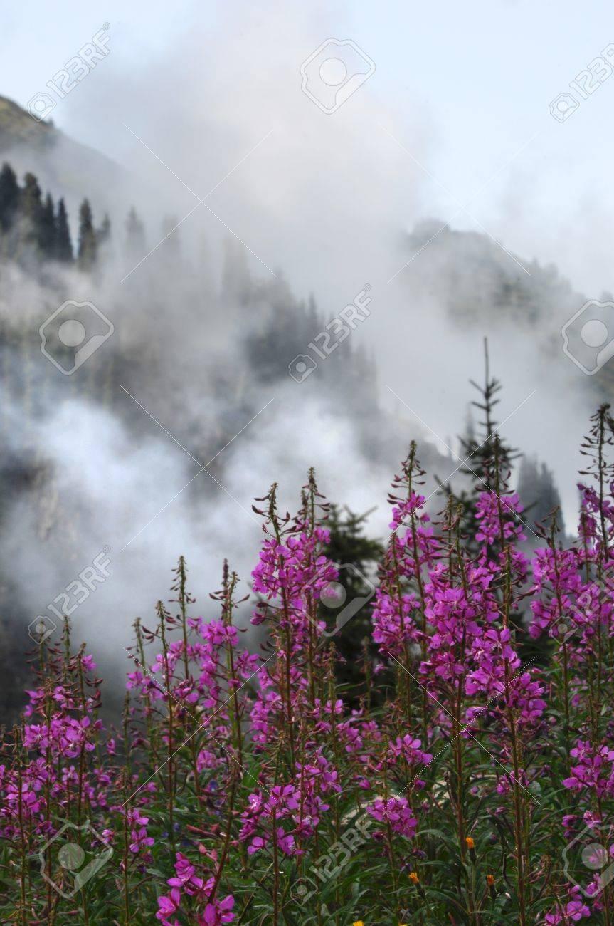 mountains Stock Photo - 14045597