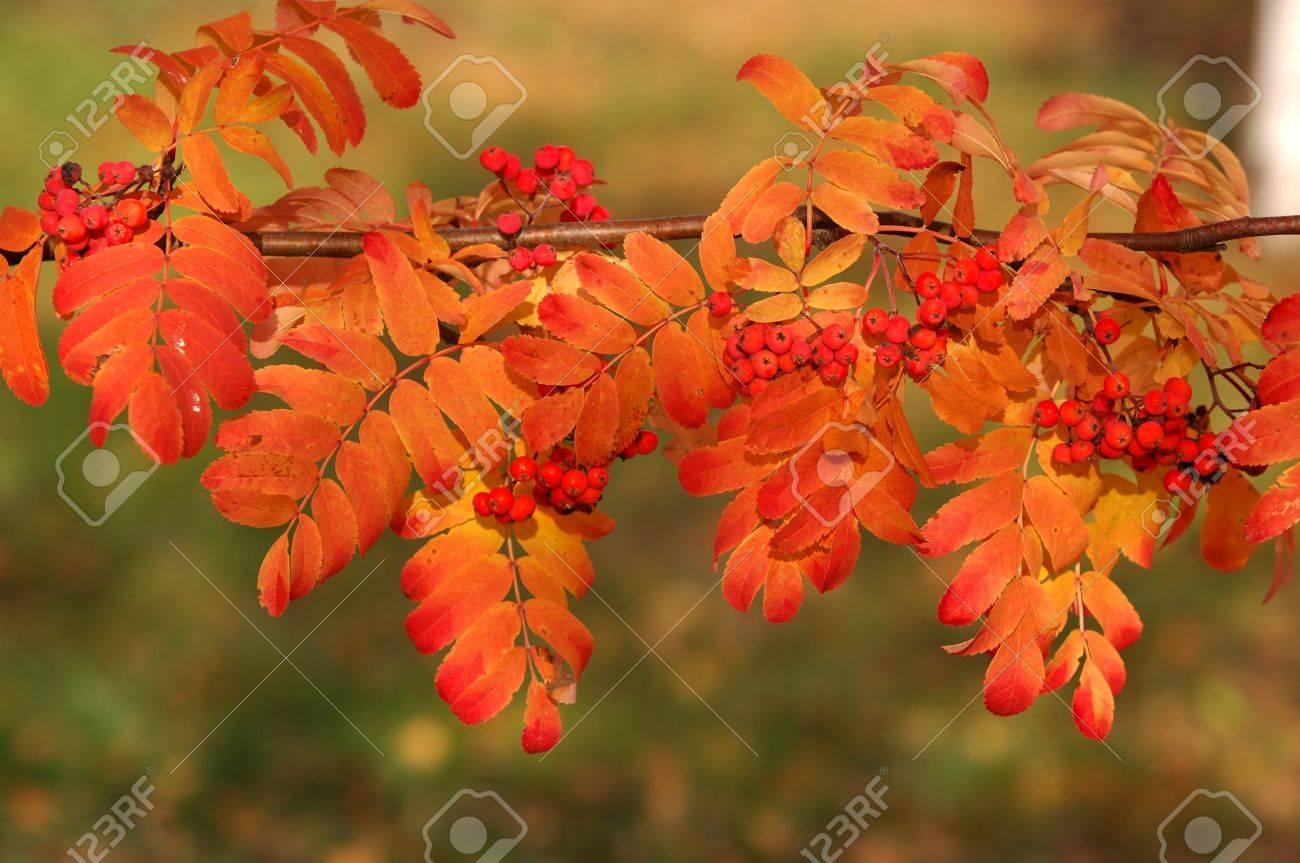 autumn Stock Photo - 14073488