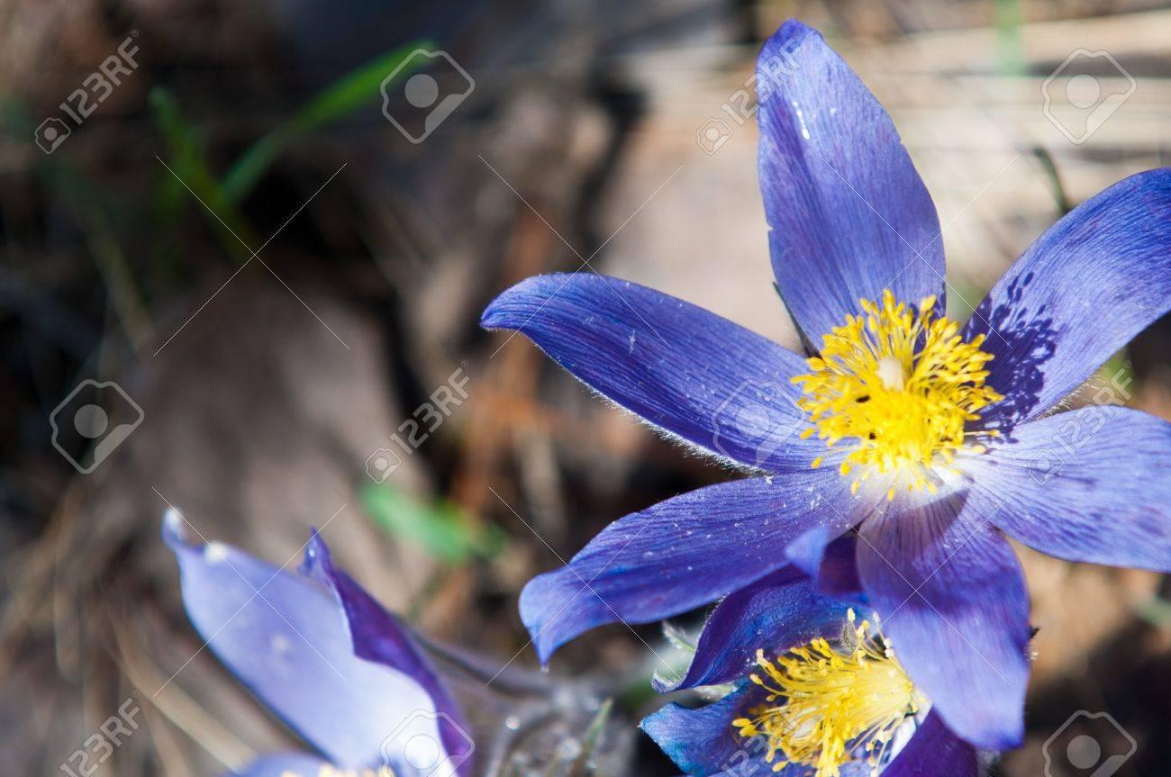 flowers Stock Photo - 14083564