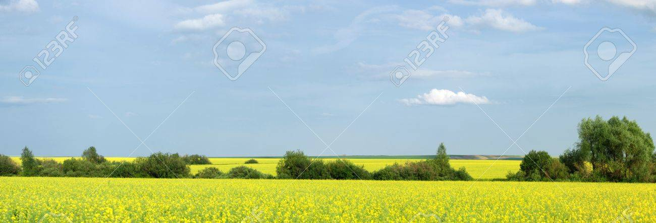 Rapeseed field. Yellow flowers. The bright sun. blue sky Stock Photo - 14601359