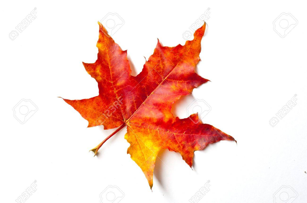 autumn leaves Stock Photo - 15658307