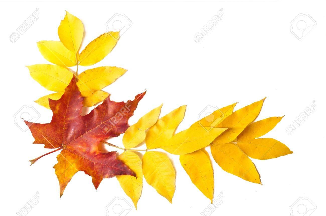 autumn leaves Stock Photo - 15658305