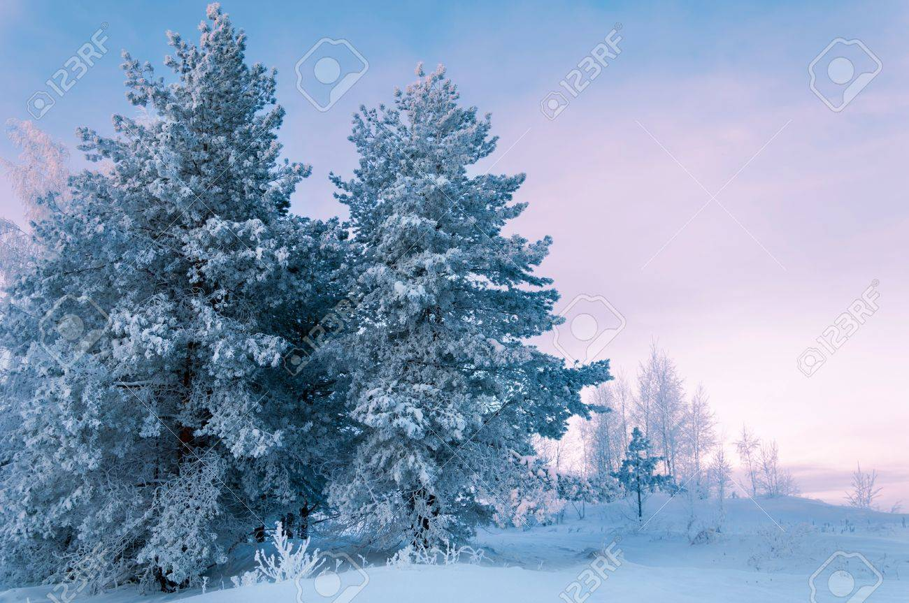 Trees covered with rime, a bright sunny day Stock Photo - 17570035