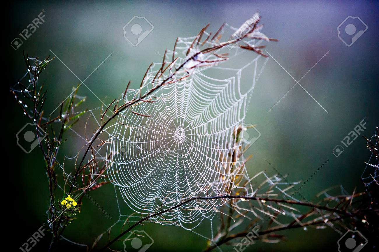 woven web of the spider, dew on a spider web Stock Photo - 32945486