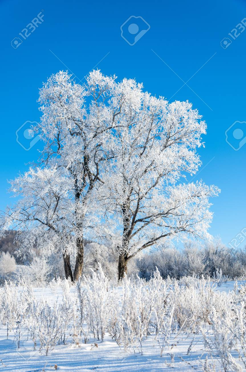 Inverno, inverno-marea, stagione invernale, hibernate, ha più freddo  stagione dell'anno