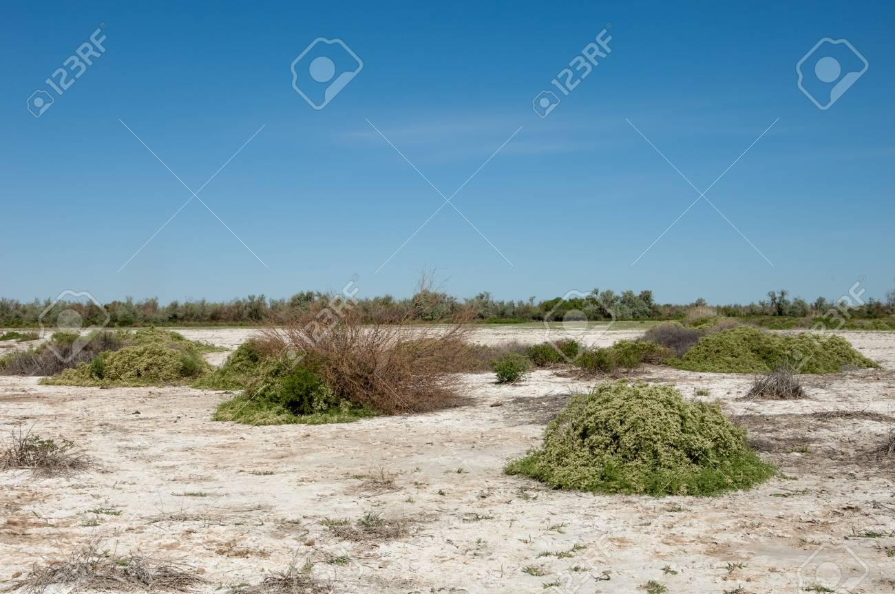 草原の塩類集積土壌。塩塩塩。 ...