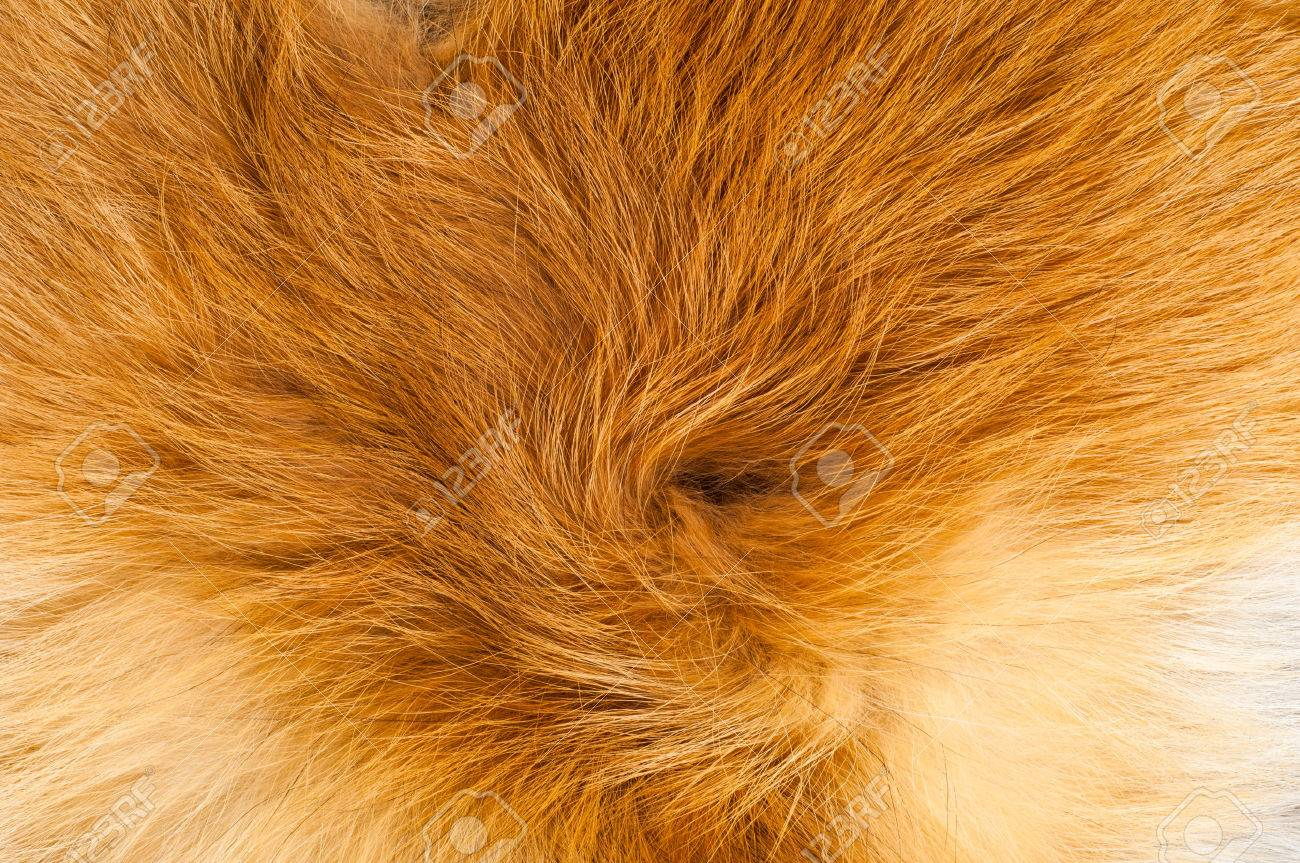 Textures red fox fur. Red fox shaggy fur texture cloth abstract, furry rusty texture plain surface, rough pelt background in horizontal orientation, nobody. Stock Photo - 40248807
