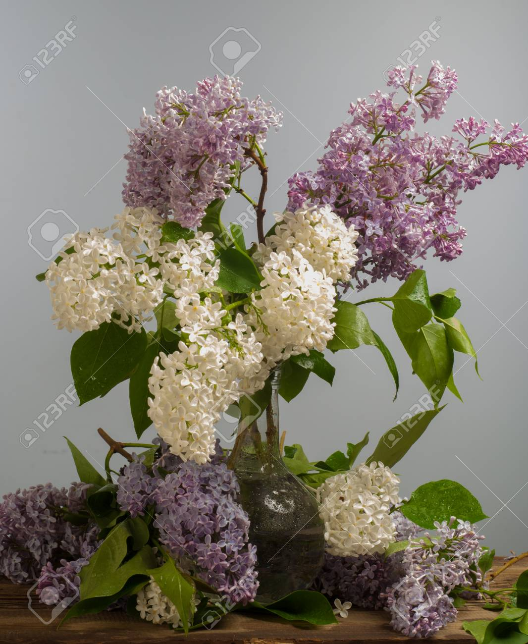 Shrubs with purple flowers at end of branch - Lilac Flowers Large Garden Shrub With Purple Or White Fragrant Flowers Stock Photo