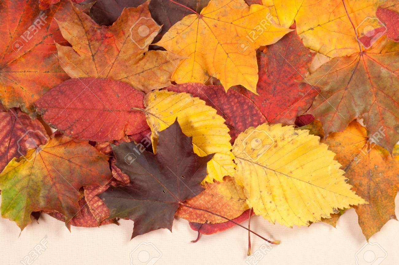Texture, background. Leaves fall Stock Photo - 45681019