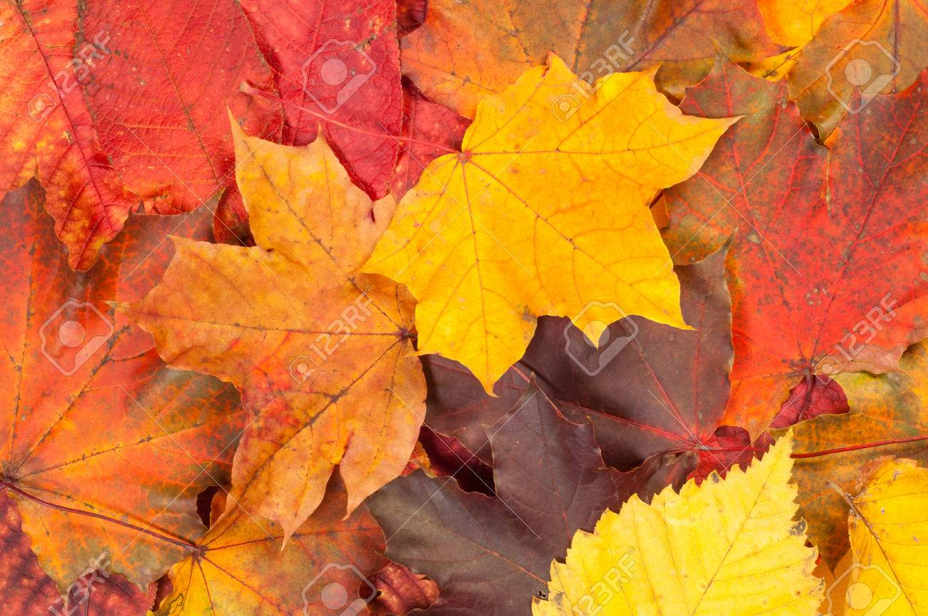 Texture, background. Leaves fall Stock Photo - 45681066