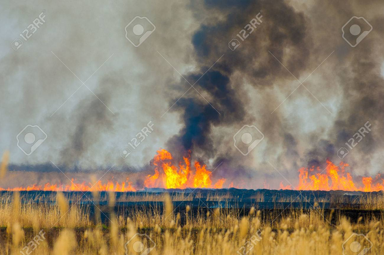 burning reeds. fire. early spring, withered reeds, careless handling of fire Stock Photo - 46788537