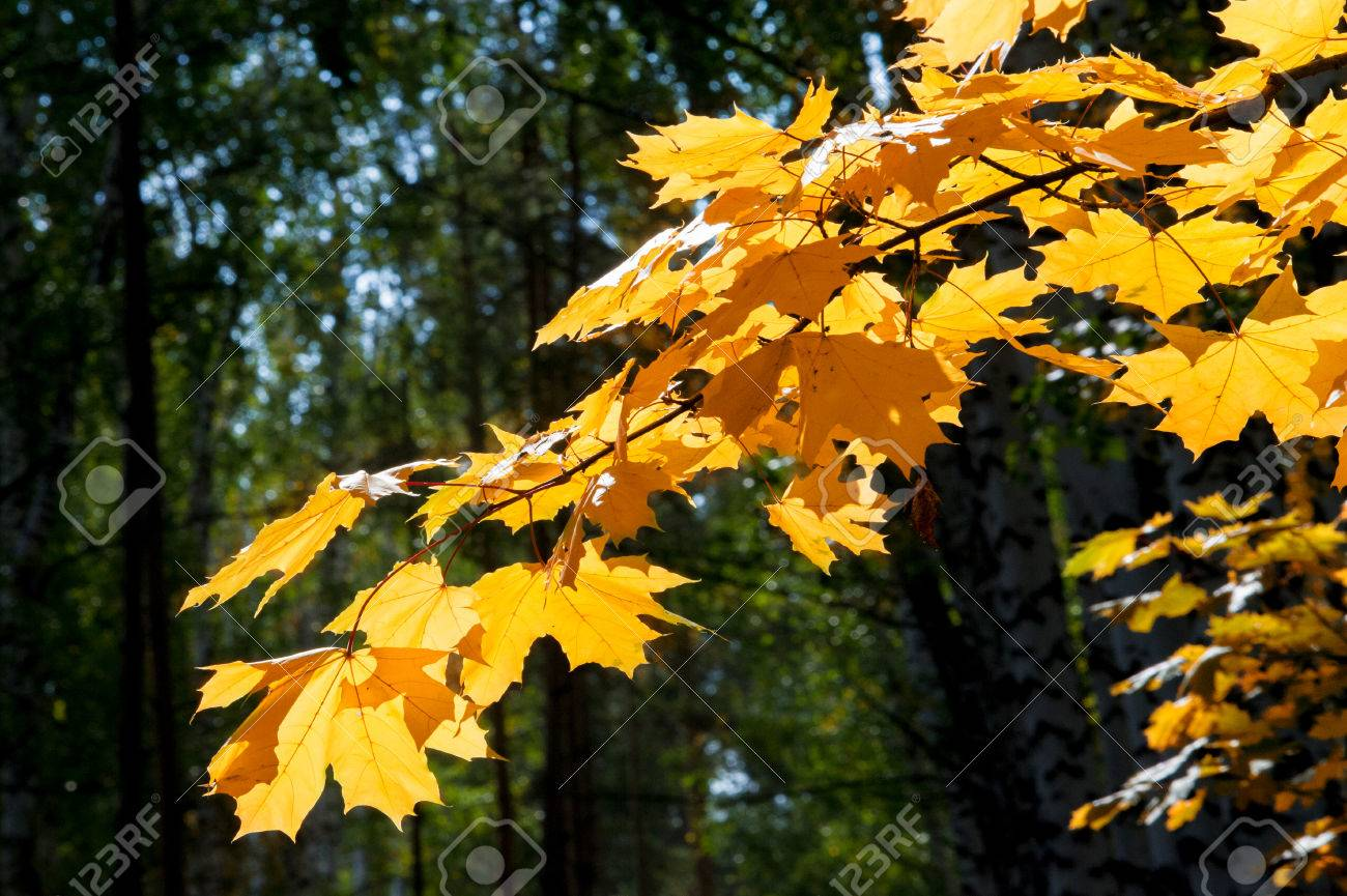autumn, fall, leaf fall, fall of the leaf. the third season of the year, when crops and fruits are gathered and leaves fall, in the northern hemisphere from September to November and in the southern hemisphere from March to May. Stock Photo - 46789406
