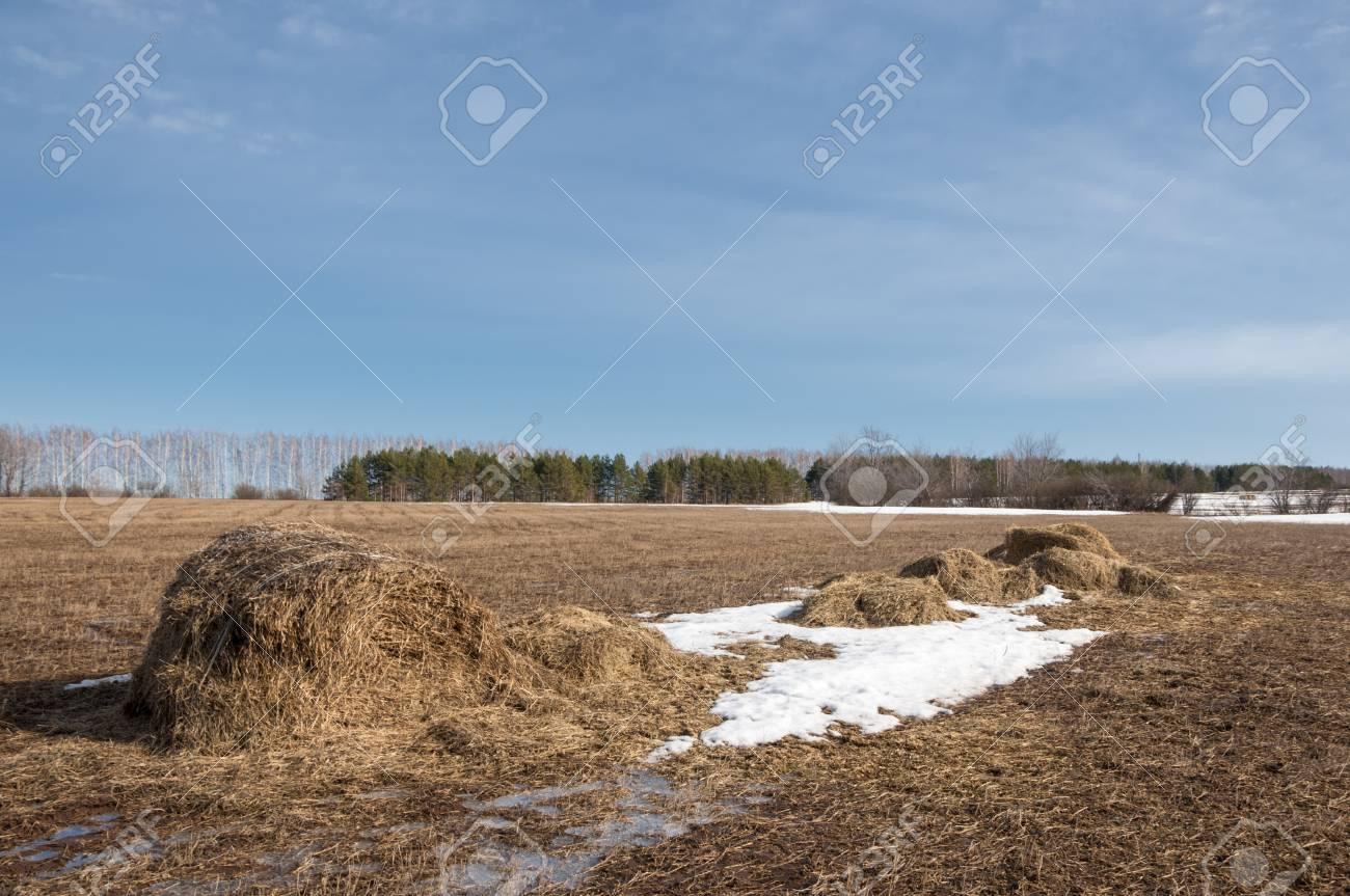 春の森 枯れた草 最後の雪 暖かい春の日 デスクトップの壁紙に