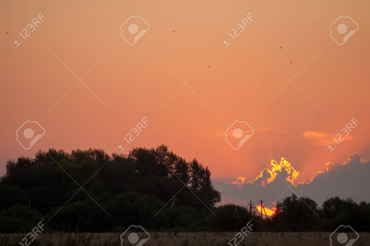 Sunrises Couchers De Soleil Coucher De Soleil Dans La Prairie Le