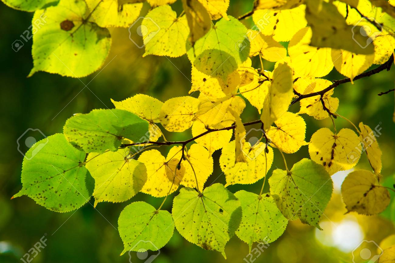 Texture, Pattern, Background. Leaves Fall. Leaves And Twigs With ...