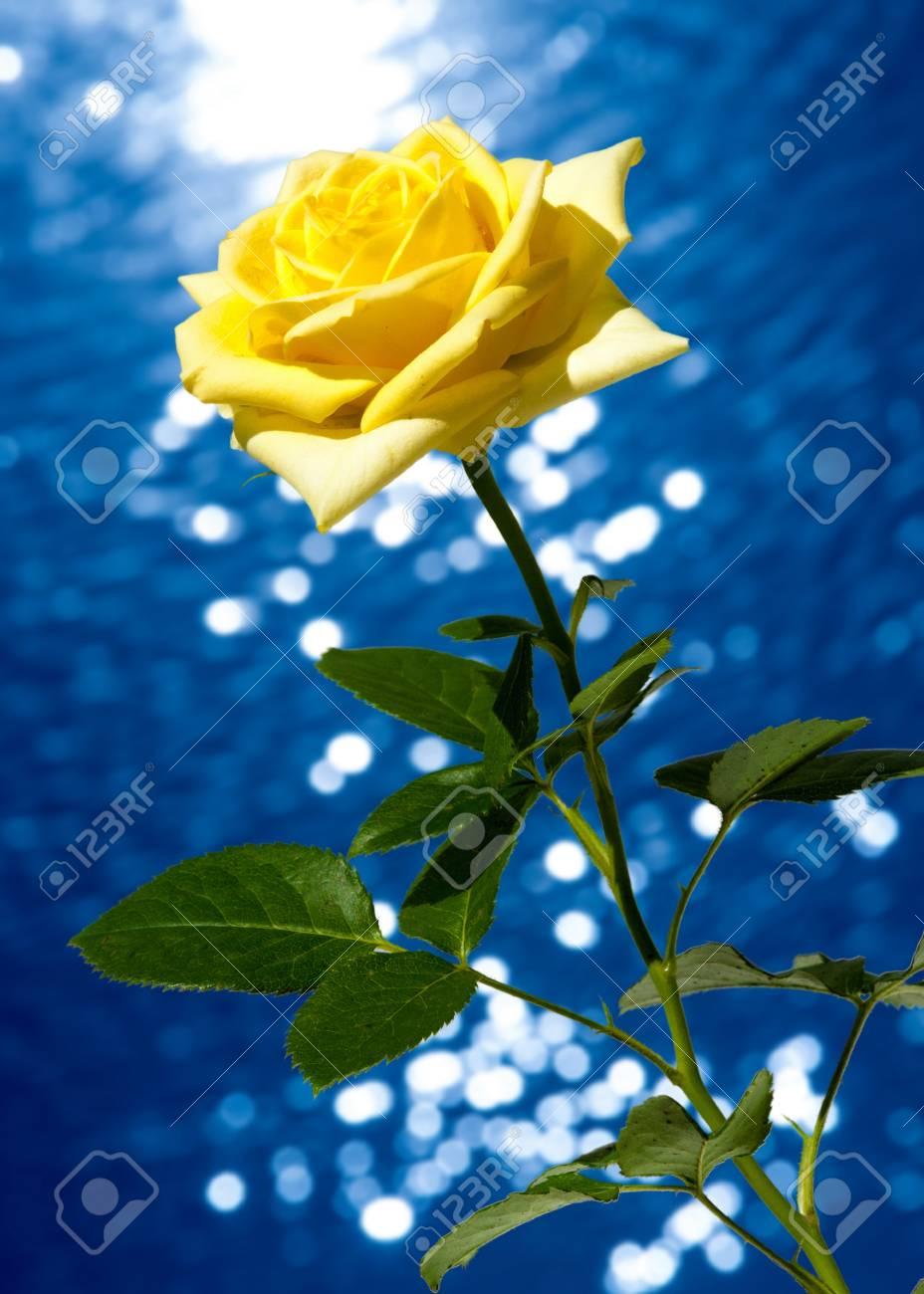 Textura Patron Fondo Rosas La Planta Con Hermosas Flores