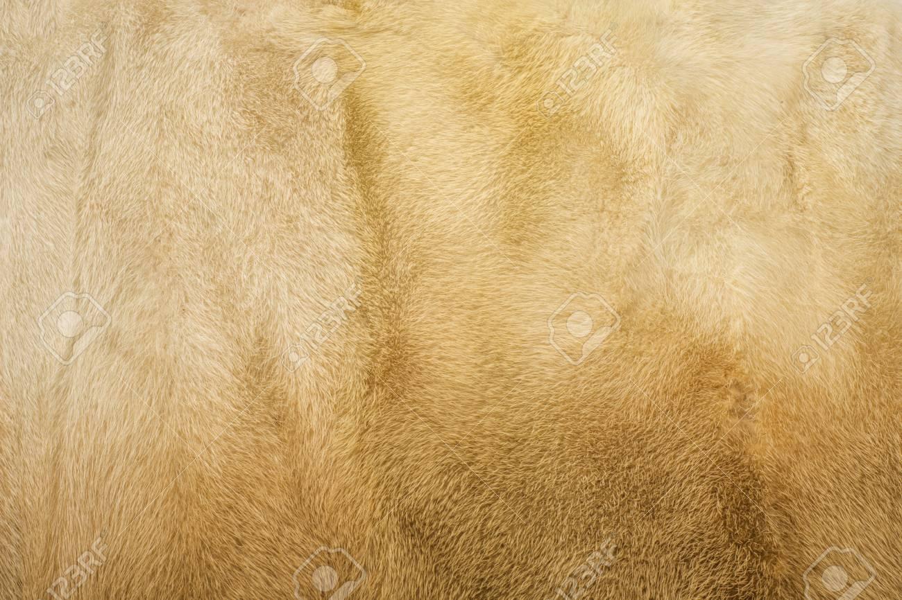 Abrigo de mink en ingles