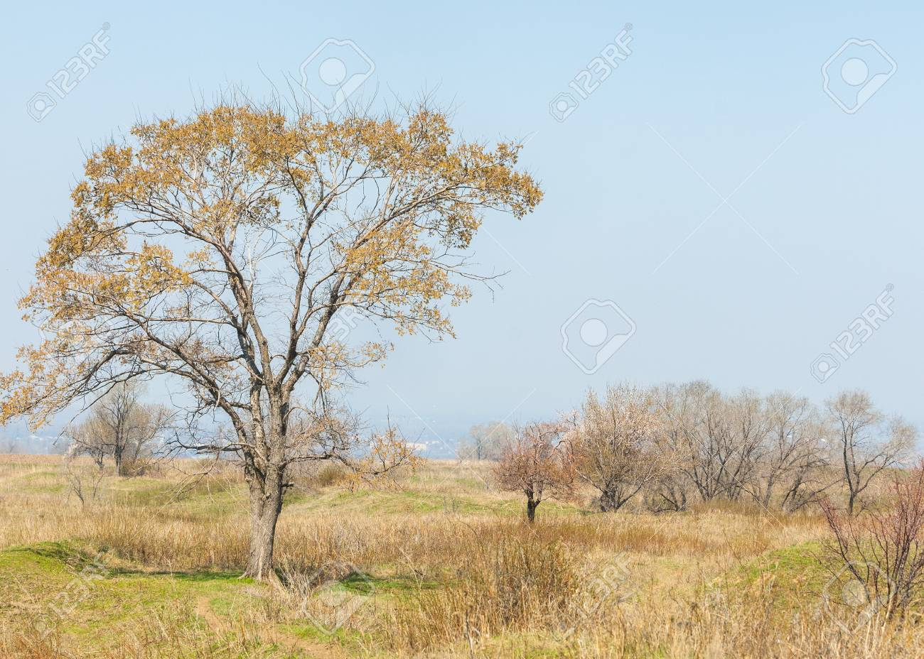 春楡の葉なし撮影 ロイヤリティ...