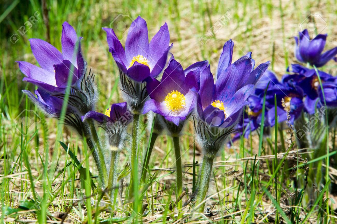 Purple spring flowers names gallery fresh lotus flowers spring flowers names gallery flower decoration ideas mightylinksfo