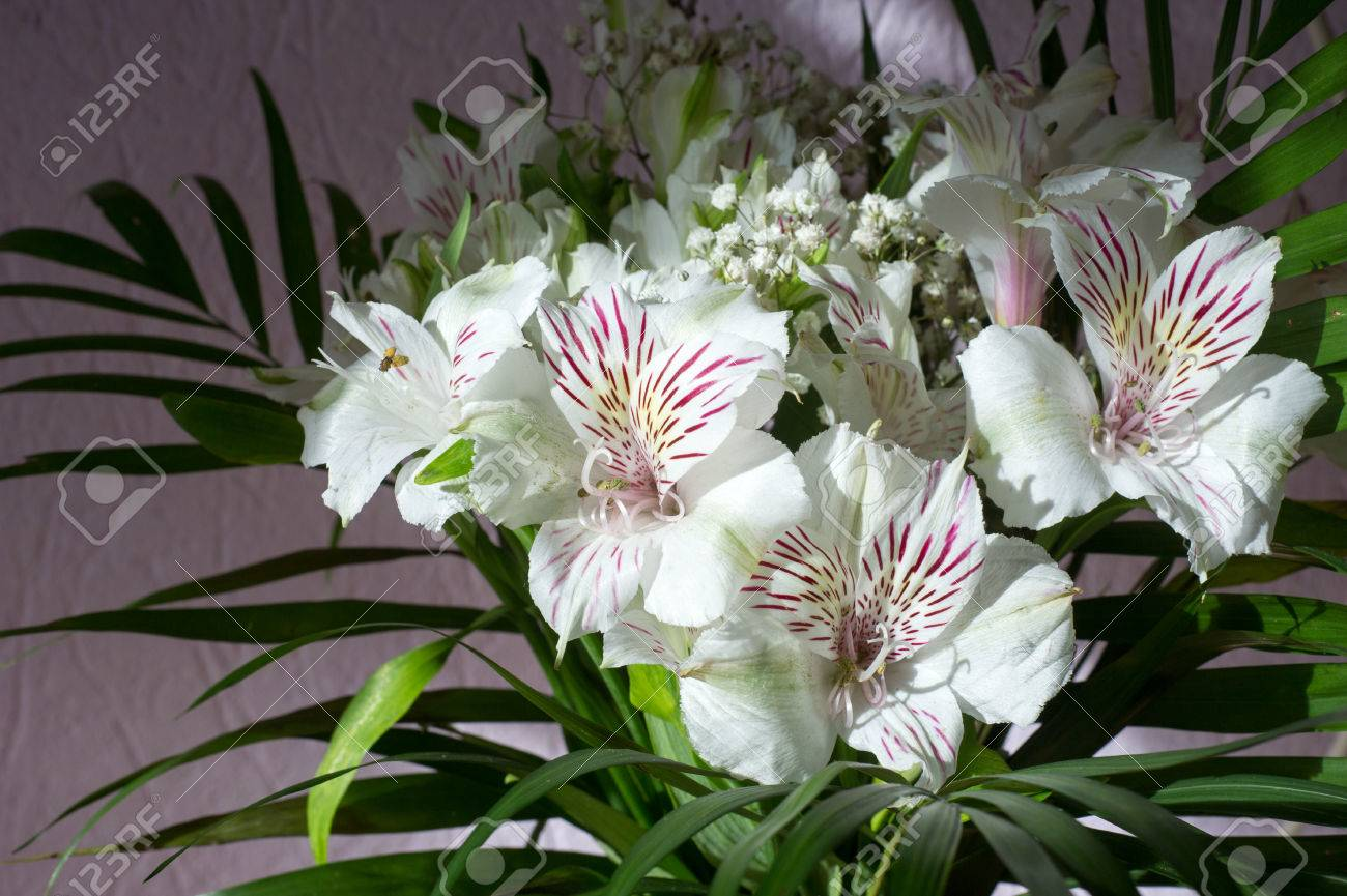 Alstroemeriacommonly called the peruvian lily or lily of the alstroemeriacommonly called the peruvian lily or lily of the incas is a genus izmirmasajfo