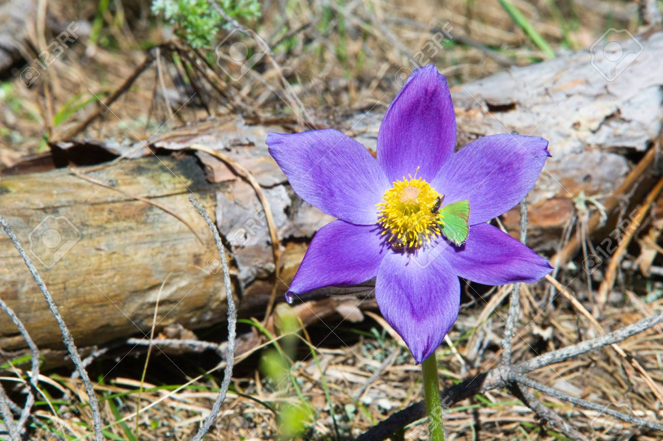 Spring Landscape Flowers Growing In The Wild Spring Flower Stock