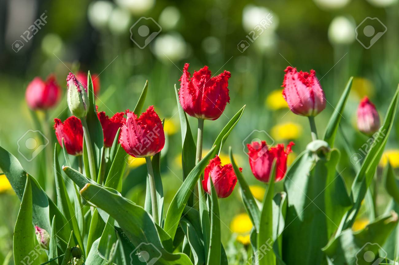 Spring landscape with flowers tulip beautiful bouquet of tulips spring landscape with flowers tulip beautiful bouquet of tulips colorful tulips tulips mightylinksfo
